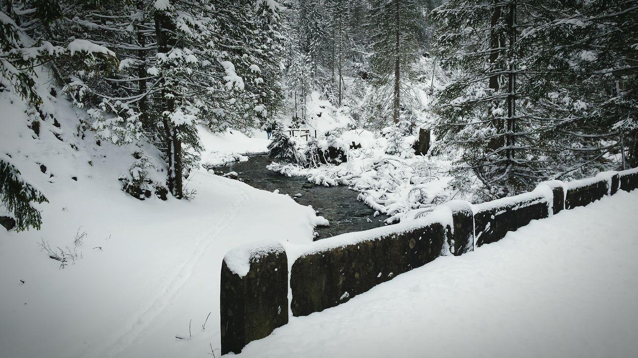 Dolina Chochołowska Snow ❄ Winter Trees