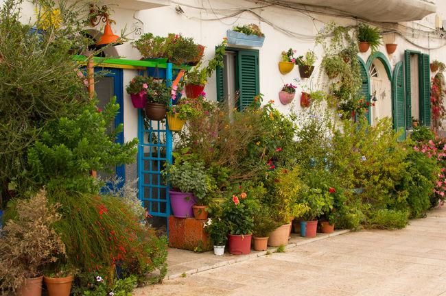 Beauty Doors Flowers,Plants & Garden Nature Outdoor Outdoors Photograpghy  Plants Pots View