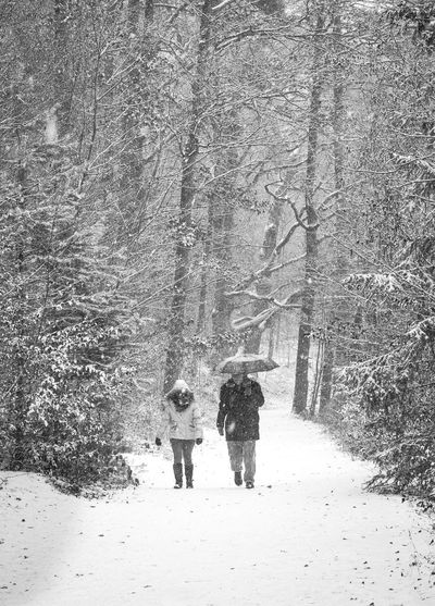 Adult Adults Only Blackandwhite Bnw Bnw_captures Cold Temperature Day Full Length Men Nature Outdoor Photography Outdoors People Real People Snow Snowing Tree Walking Winter Winter Tones Long Goodbye The Great Outdoors - 2017 EyeEm Awards The Street Photographer - 2017 EyeEm Awards The Portraitist - 2017 EyeEm Awards BYOPaper! Let's Go. Together. Shades Of Winter