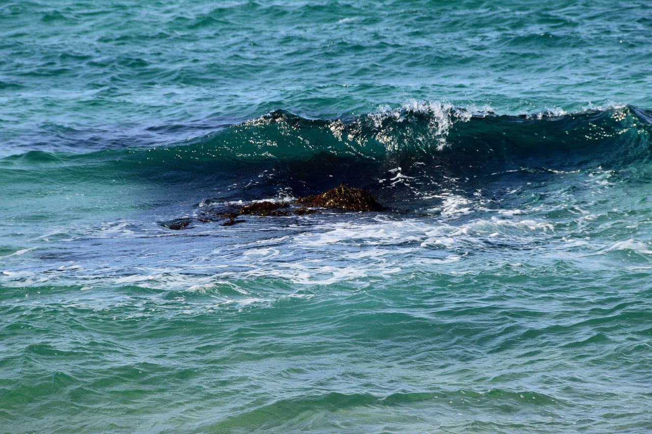 sea, no people, nature, animals in the wild, water, day, outdoors, one animal, waterfront, animal themes, beauty in nature, animal wildlife, wave, mammal, aquatic mammal, sea life, swimming, humpback whale