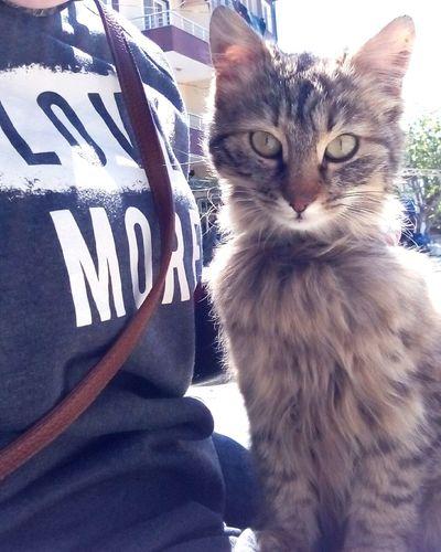 İki hafta önce sokağa atılmış sanırım. Nasıl kıydınız şu güzelliğe? Kediaşkı Kedicik 🐈 Domestic Cat Cat♡ Kediler Kediseverler Kedici AnimalCat Lovers Cats 🐱 Cat Kedi One Animal Pets Vicdan Insanlık Hayvanlar Hayvan Sevgisi Hayvanlaradegerverelim Hayvansevenler