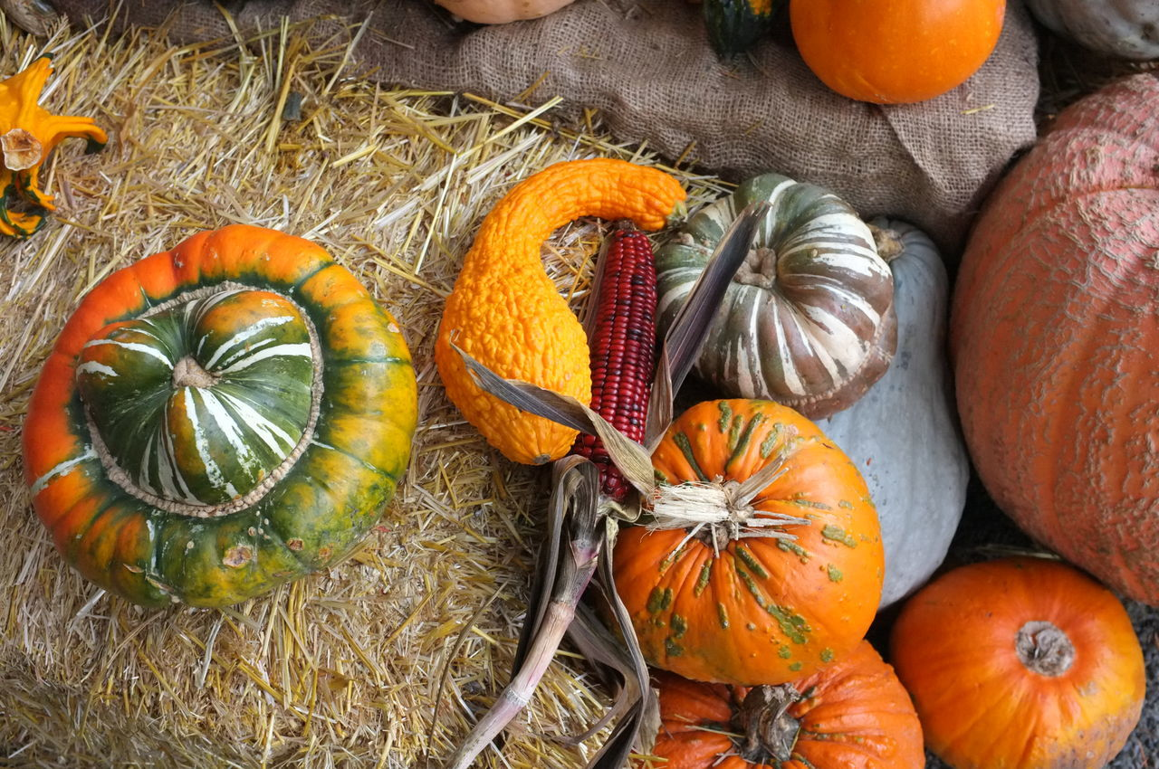 pumpkin, vegetable, orange color, food, squash - vegetable, food and drink, freshness, no people, autumn, halloween, healthy eating, gourd, day, agriculture, nature, outdoors, close-up