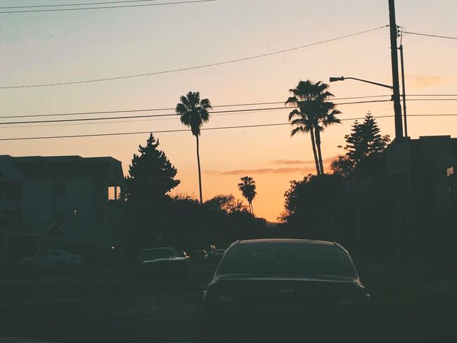 Sunset Cityscapes Losangeles Palm Trees Streetphotography