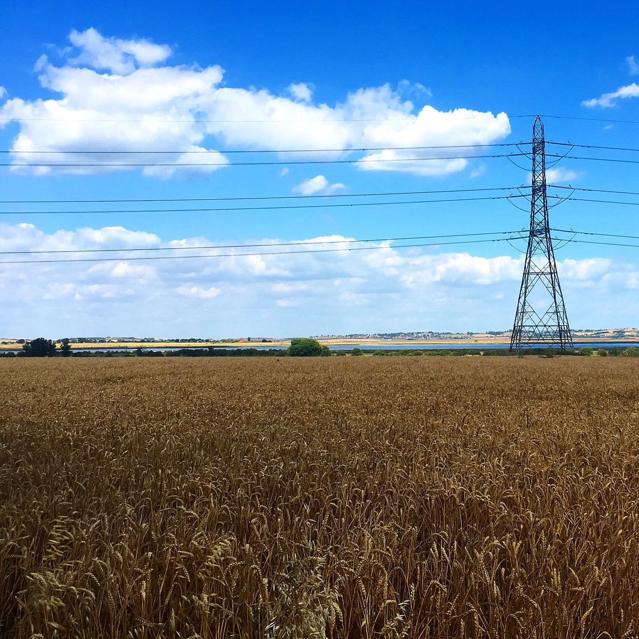 sky, field, cloud - sky, landscape, day, tranquility, connection, agriculture, no people, rural scene, tranquil scene, electricity pylon, cable, nature, beauty in nature, growth, blue, scenics, outdoors, technology