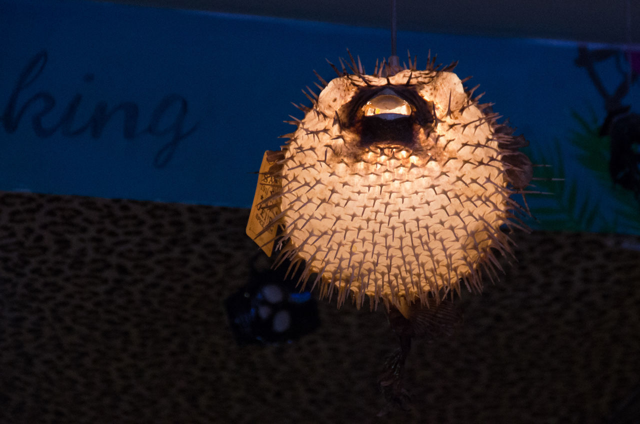 I kinda want these, if I could make them sway or bob up and down as if swimming that would be cool. Ball Ceiling Creepy Fish Glasgow  Glashow Glowing Hanging Illuminated Lamp Light No People Pufferfish Restaurant Spikes