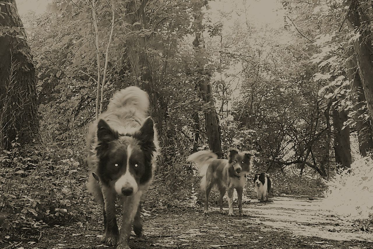 Learn & Shoot: Layering Taking Photos Black And White The Dogs Are Coming
