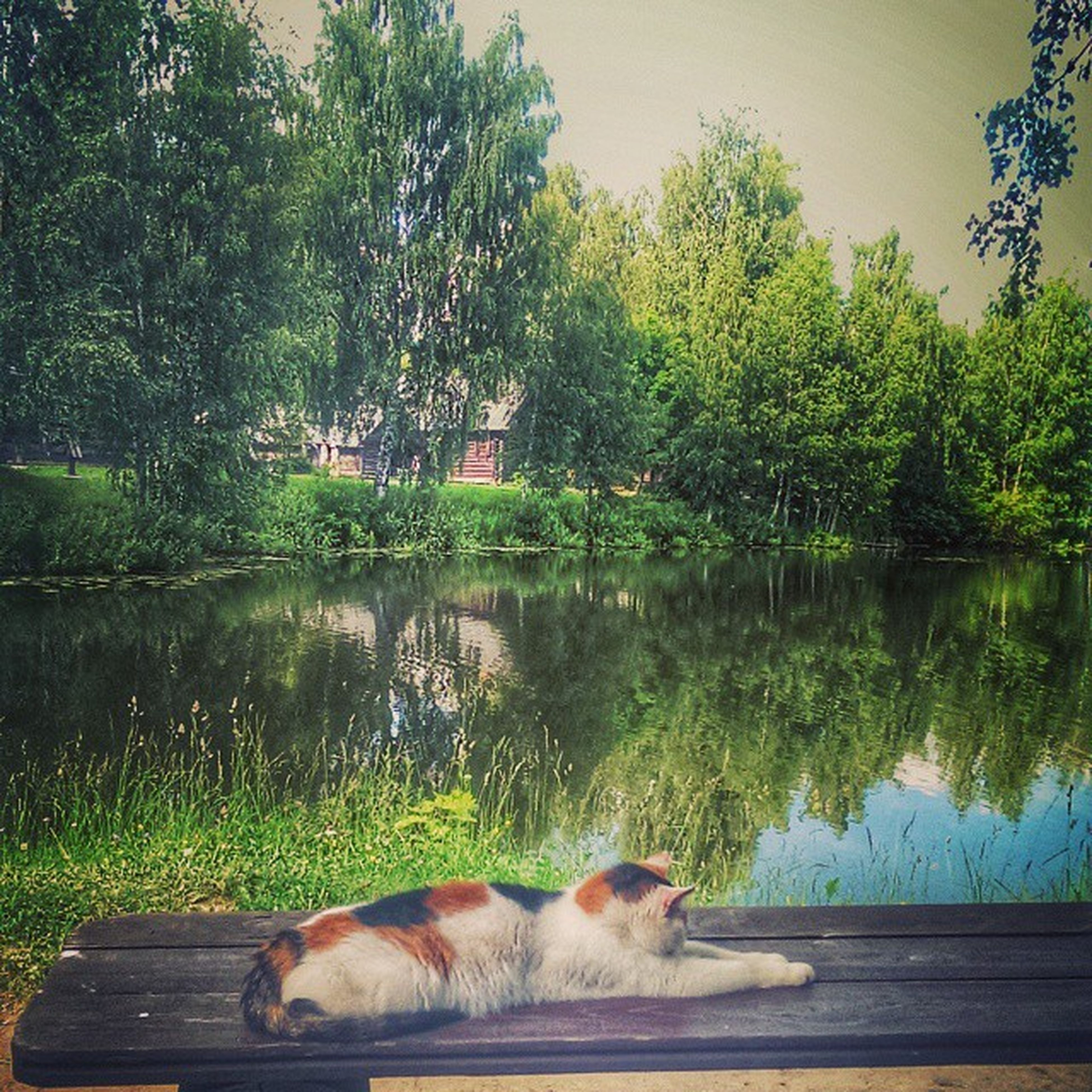 animal themes, domestic animals, mammal, pets, one animal, water, dog, tree, lake, reflection, nature, sky, grass, two animals, river, outdoors, no people, cow, relaxation, day