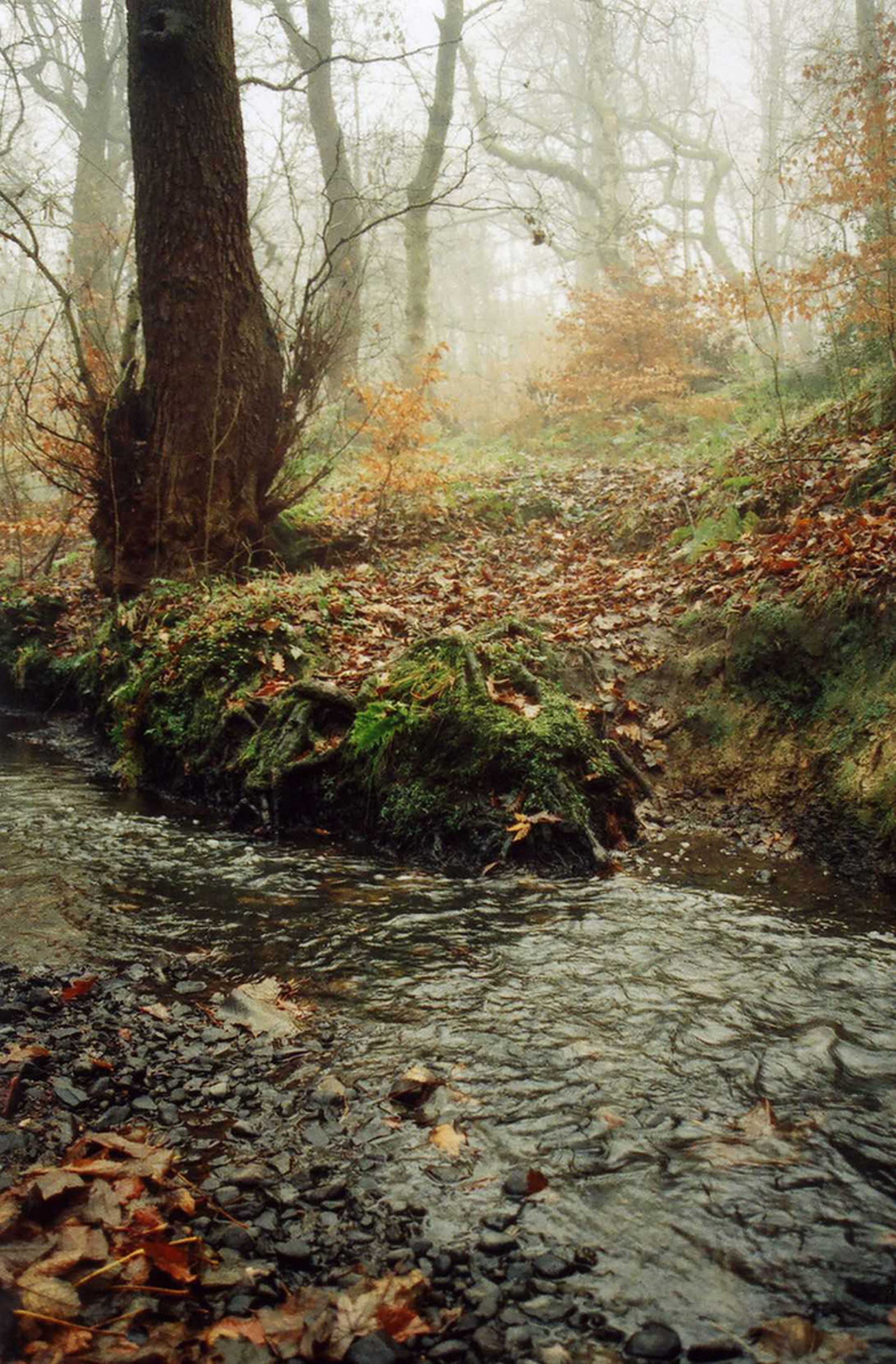 tree, forest, tranquility, water, tranquil scene, autumn, nature, leaf, beauty in nature, scenics, tree trunk, stream, change, fallen, rock - object, growth, day, non-urban scene, season, surface level