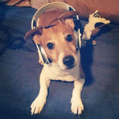 Jerry the Jackrussell ?
