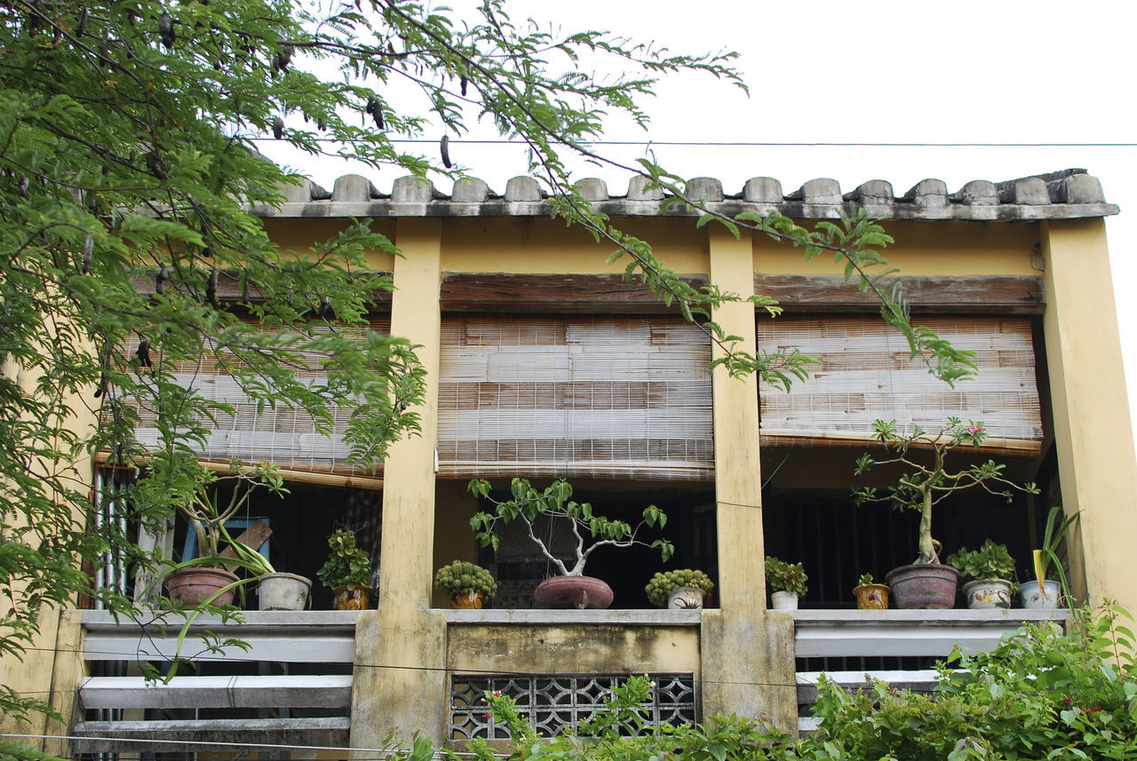 Windows in Hoi An, Vietnam Architecture Building Exterior Built Structure Collection Day Exterior Green Color Growth Hoi An Hoi An, Vietnam In A Row Large Group Of Objects No People Plant Vietnam