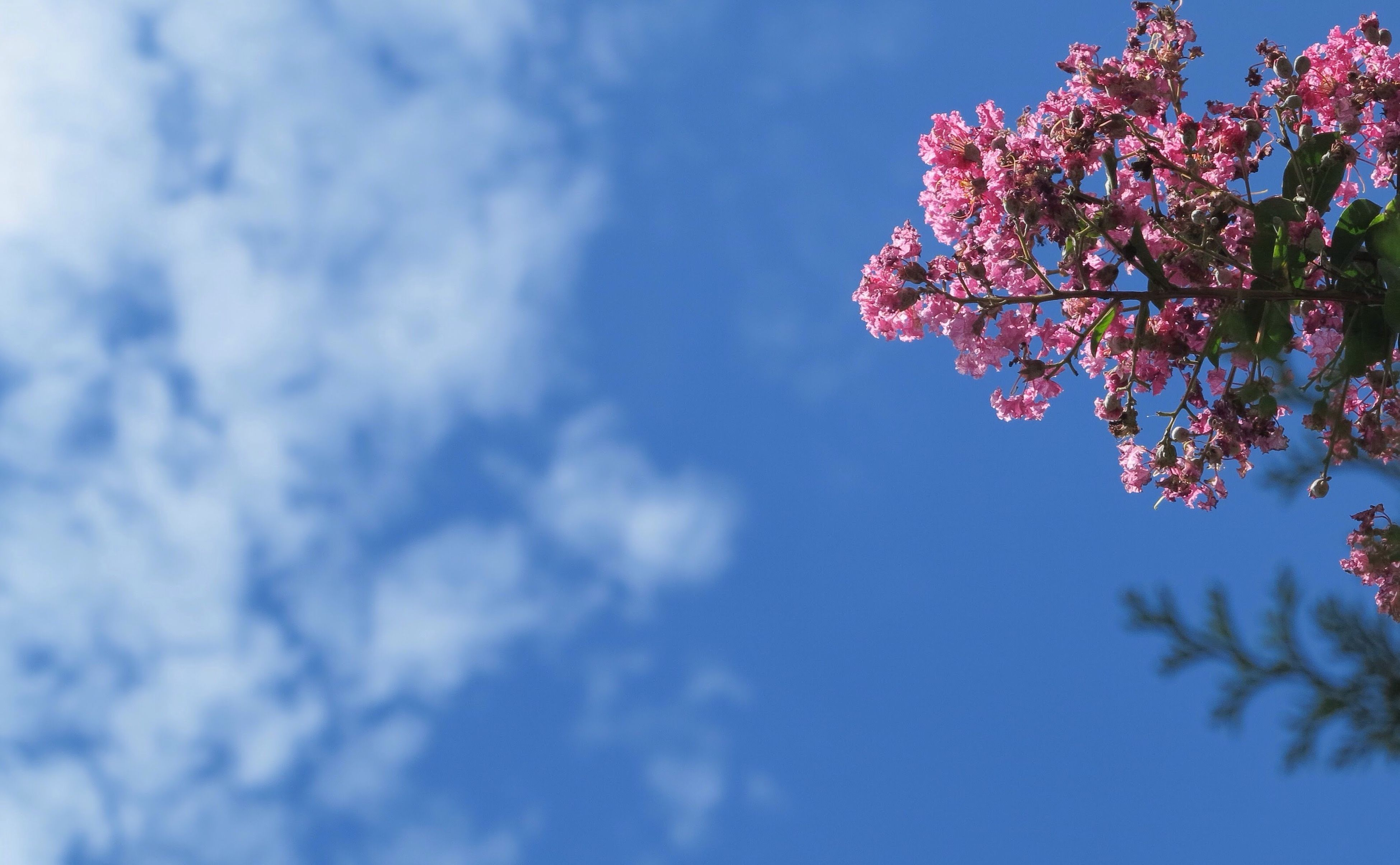 flower, low angle view, tree, sky, freshness, beauty in nature, growth, branch, pink color, nature, fragility, blossom, cloud - sky, cherry blossom, blue, day, springtime, blooming, in bloom, pink