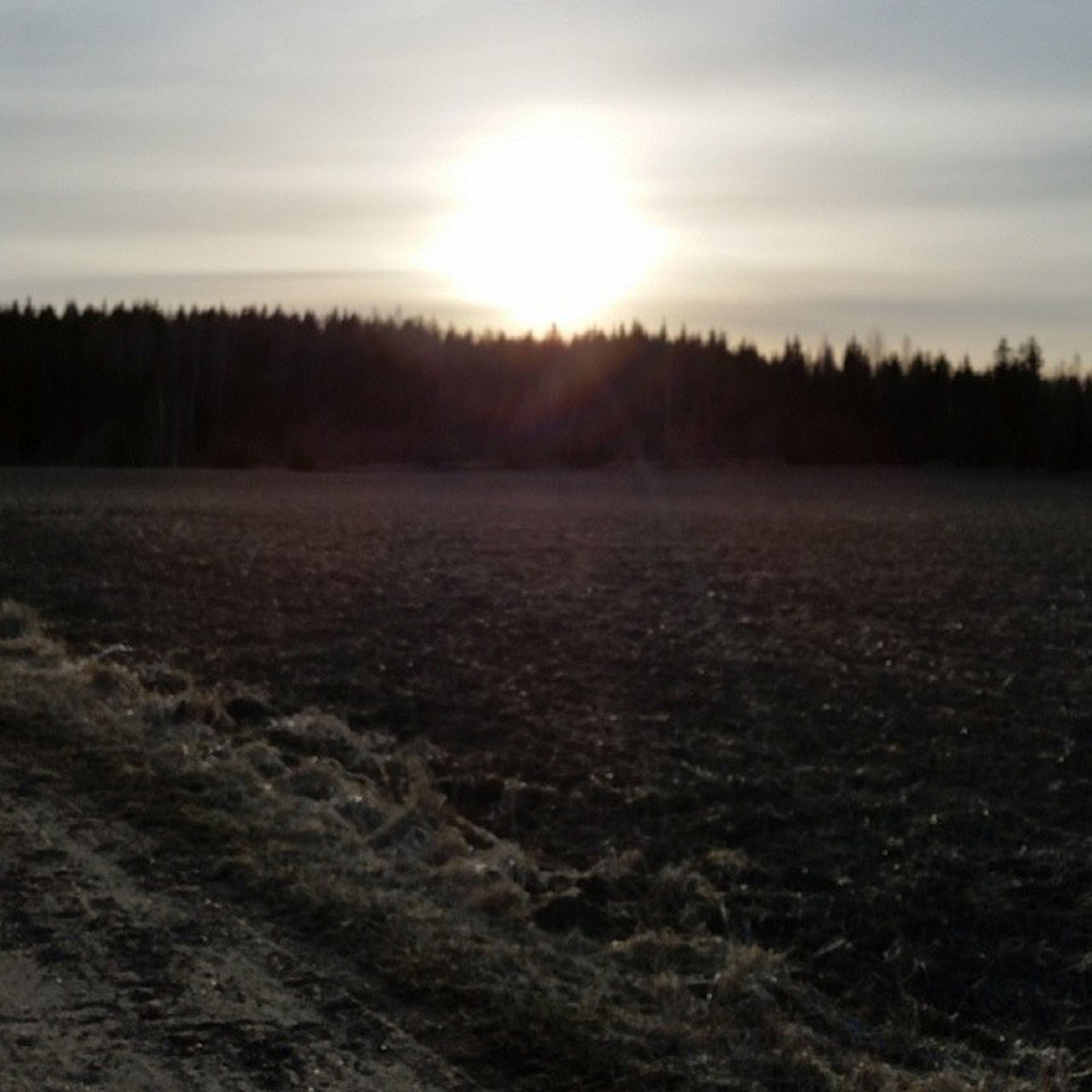 tranquil scene, tranquility, tree, landscape, scenics, sunset, sun, nature, beauty in nature, sky, field, sunlight, winter, snow, non-urban scene, bare tree, cold temperature, forest, sunbeam, outdoors