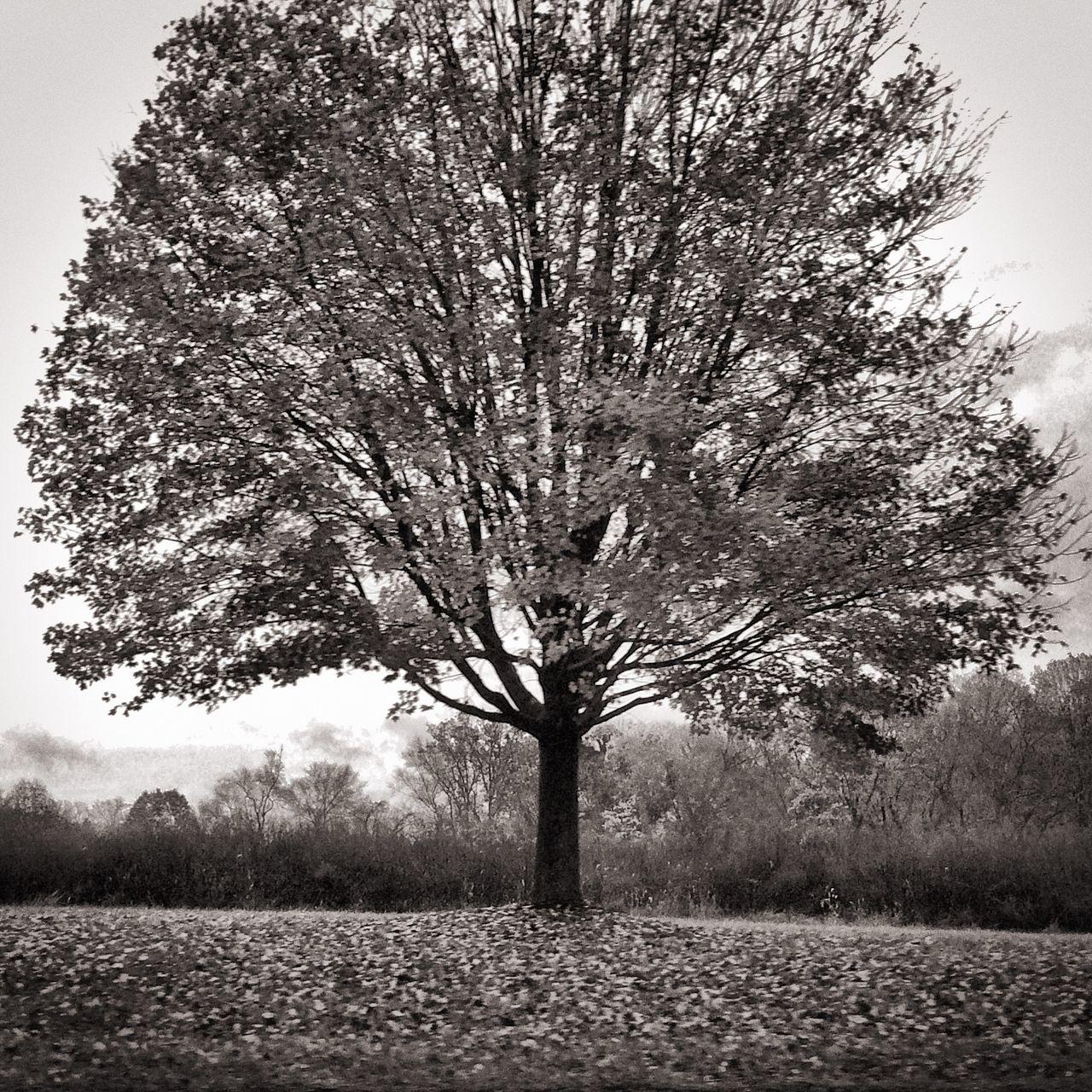 Showcase: November Black And White Nature