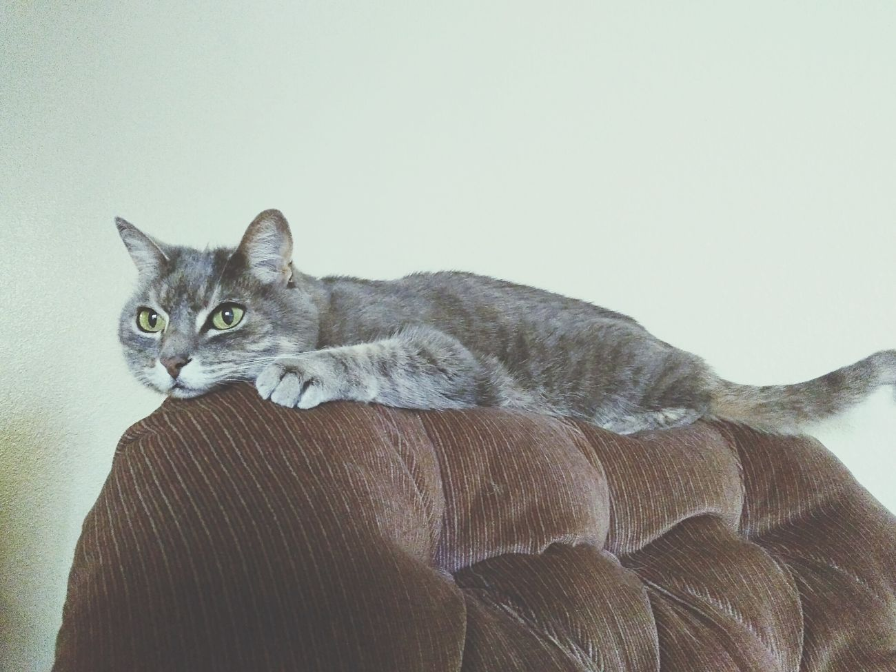 My Cat Hanging Out, Relaxing