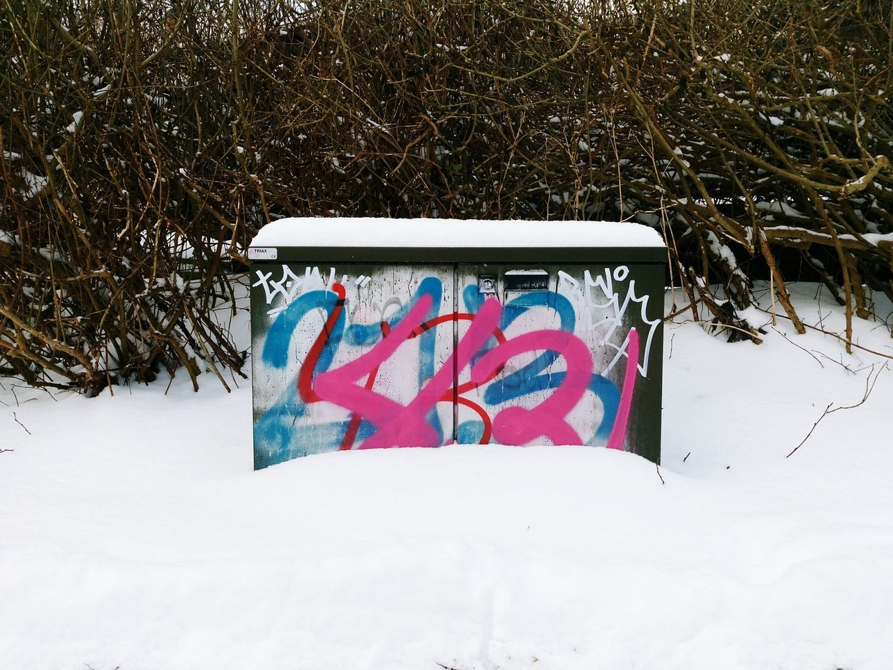 Graffiti Snow Winter Communication Outdoors Close-up No People Tagging Paint Drips Graffiti Wall Dirtyoldtown Urbanphotography Textures And Surfaces Urbanexploration Snowfall Whitewinter Cold Weather Cold Days Coldoutside Covered With Snow Day Aerosol Spray Paint Bush Hedgerow