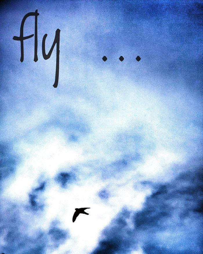 Fly Fly Away! Fly High☁☁☁ Fly High See Far Fly Higher Breathing Fresh Air Glowing Lights Lights And Shadows No Border Freedom! Paramount  Above The Clouds Above And Beyond Above The Sky NO LIMIT ❤