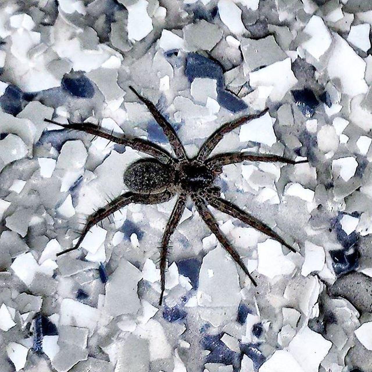 Hello there, the angel from my nightmare. Spider Blink182 Lyrics Creepy Nightmare Nature Mothernature Beautiful Beauty Photography Likeforlike Like4like L4l Lfl Picoftheday Cool
