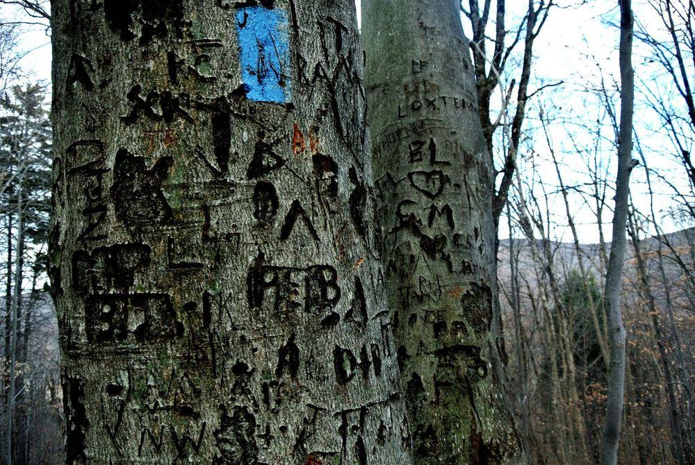 Graffiti Urban Nature Wood Carving Man Vs Nature Remembering Capture The Moment Showcase: November Tree Carving The Explorer The Adventurer