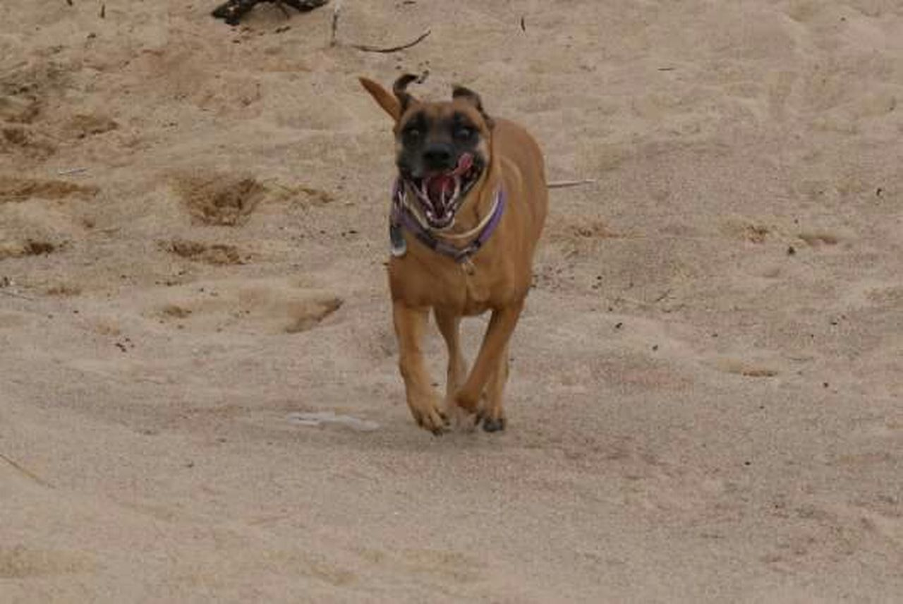 Mydog Runningasifthereisnotomorrow Lovethisdog Truelove Freedom Capturing Freedom Africa