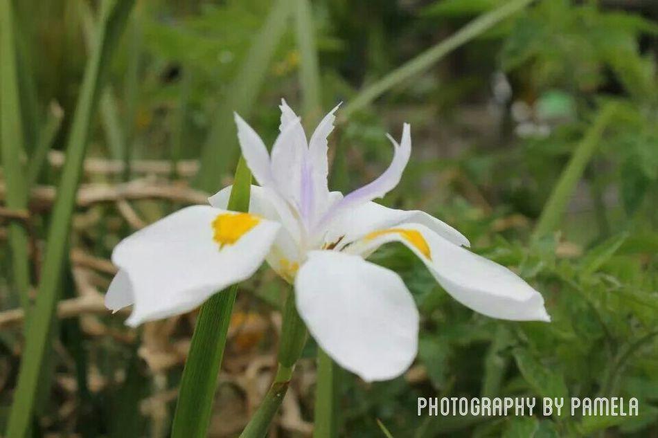 Flowers Nature First Eyeem Photo Hawaii⍥⃝