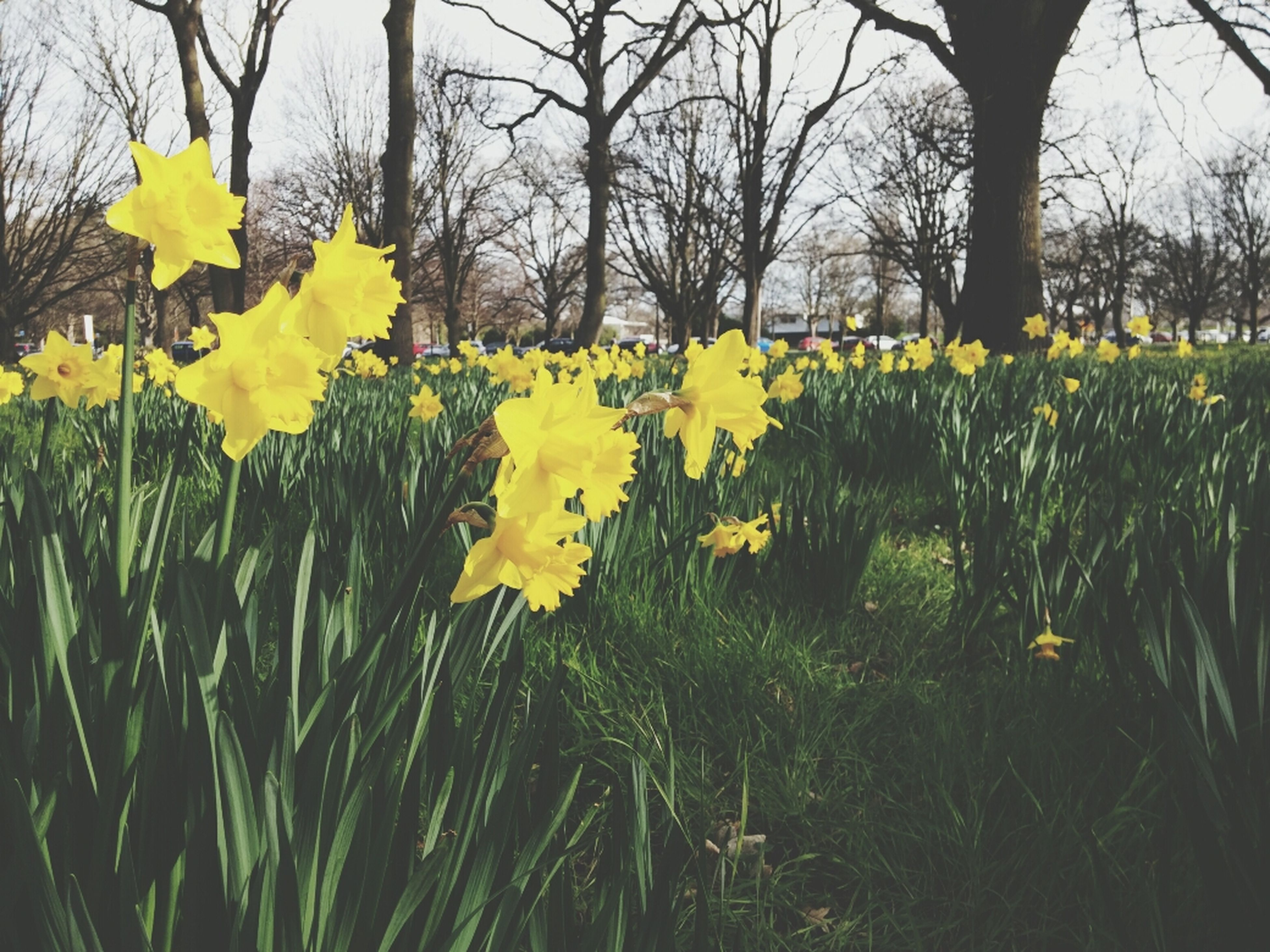 flower, yellow, growth, freshness, beauty in nature, fragility, nature, field, tree, petal, blossom, plant, blooming, in bloom, grass, tranquility, branch, springtime, green color, day