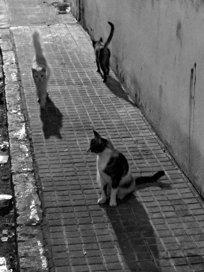 Animal Themes Domestic Animals Mammal Pets No People Dog Day Outdoors Water Street Cats Street Cat Cat Cats Of EyeEm Cats 🐱 Catstagram Nocturnal Nocturne Night Black & White Photography EyeEm Best Shots EyeEm Gallery EyeEm Masterclass EyeEmBestPics The Way Forward Tranquility