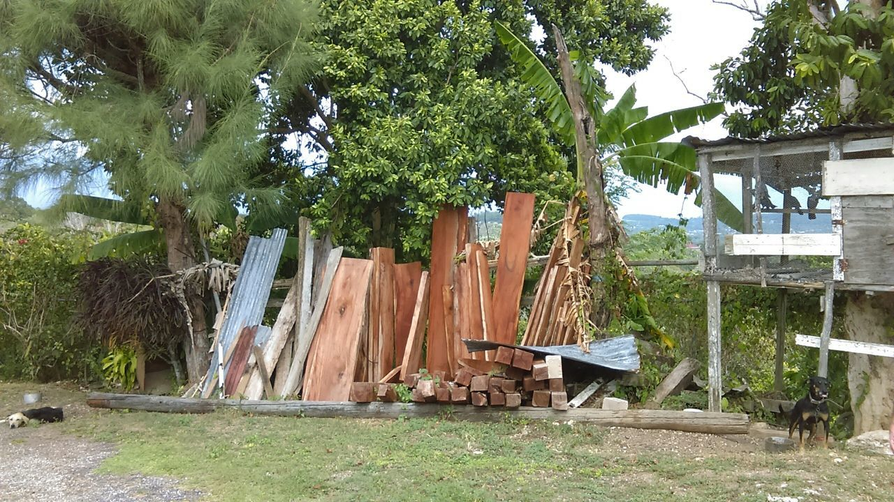 Beautiful mahogany wood. Tropical Beauty Jamaican Vibes