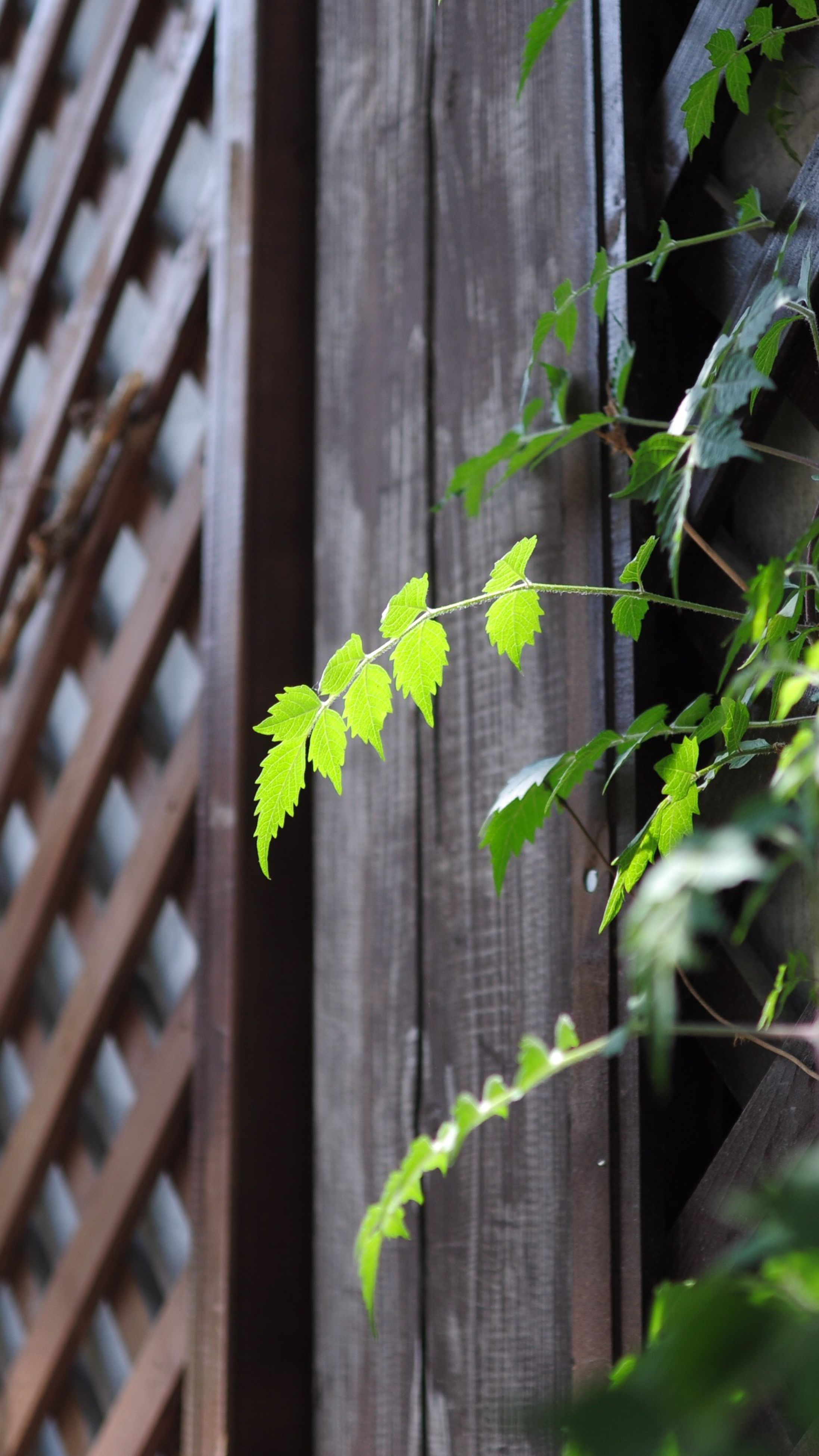 green color, growth, plant, leaf, close-up, fence, focus on foreground, ivy, nature, growing, built structure, protection, day, selective focus, outdoors, architecture, no people, wall - building feature, stem, green