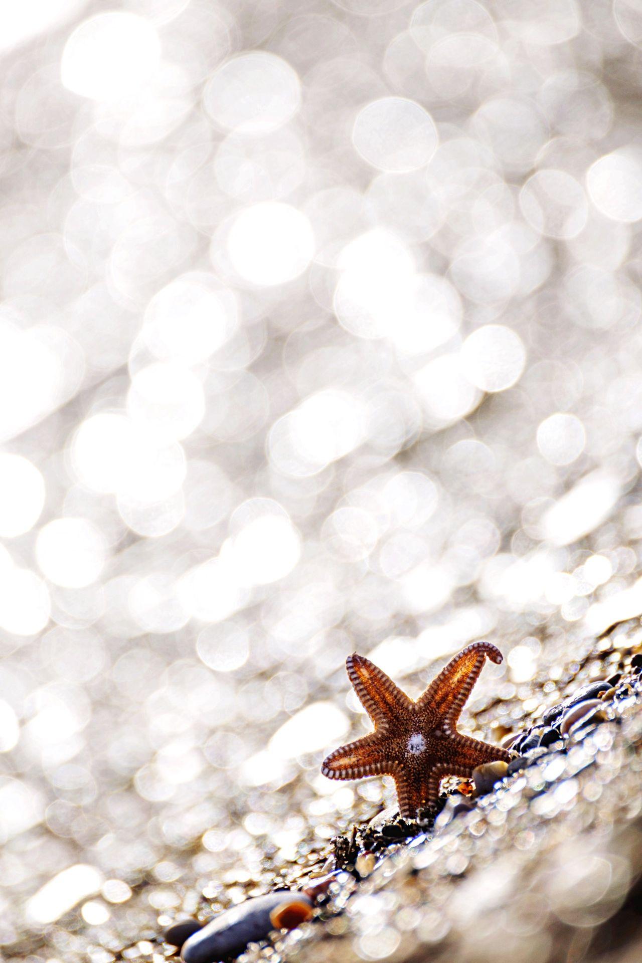 Beautiful stock photos of holiday, Animal Themes, Beach, Day, Lens Flare