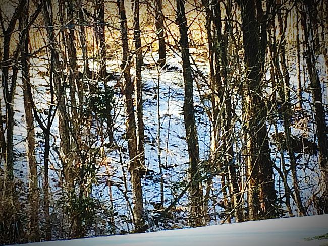 Trees Snow Nature Mothernature Eyemnaturelover Nature_collection Snowy Snow Covered Aftermath Of Snowstorm '16