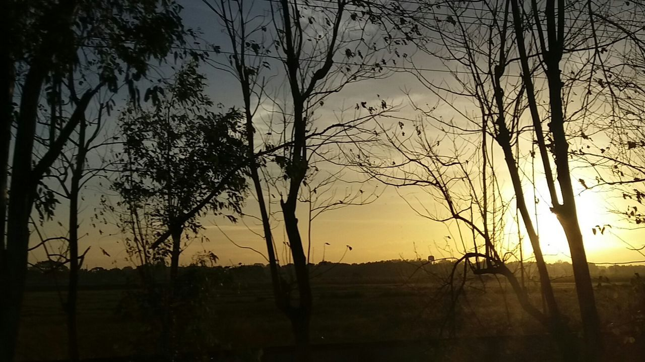 Etchings. Sunrise Silhouette Sunrise_sunsets_aroundworld Sunrise Series Silhouette Mobilephotography Mobilephotographyph EyeEm Pampanga Eyeem PhilippinesCapture The Moment Silhouette Tree No Filter No Edit