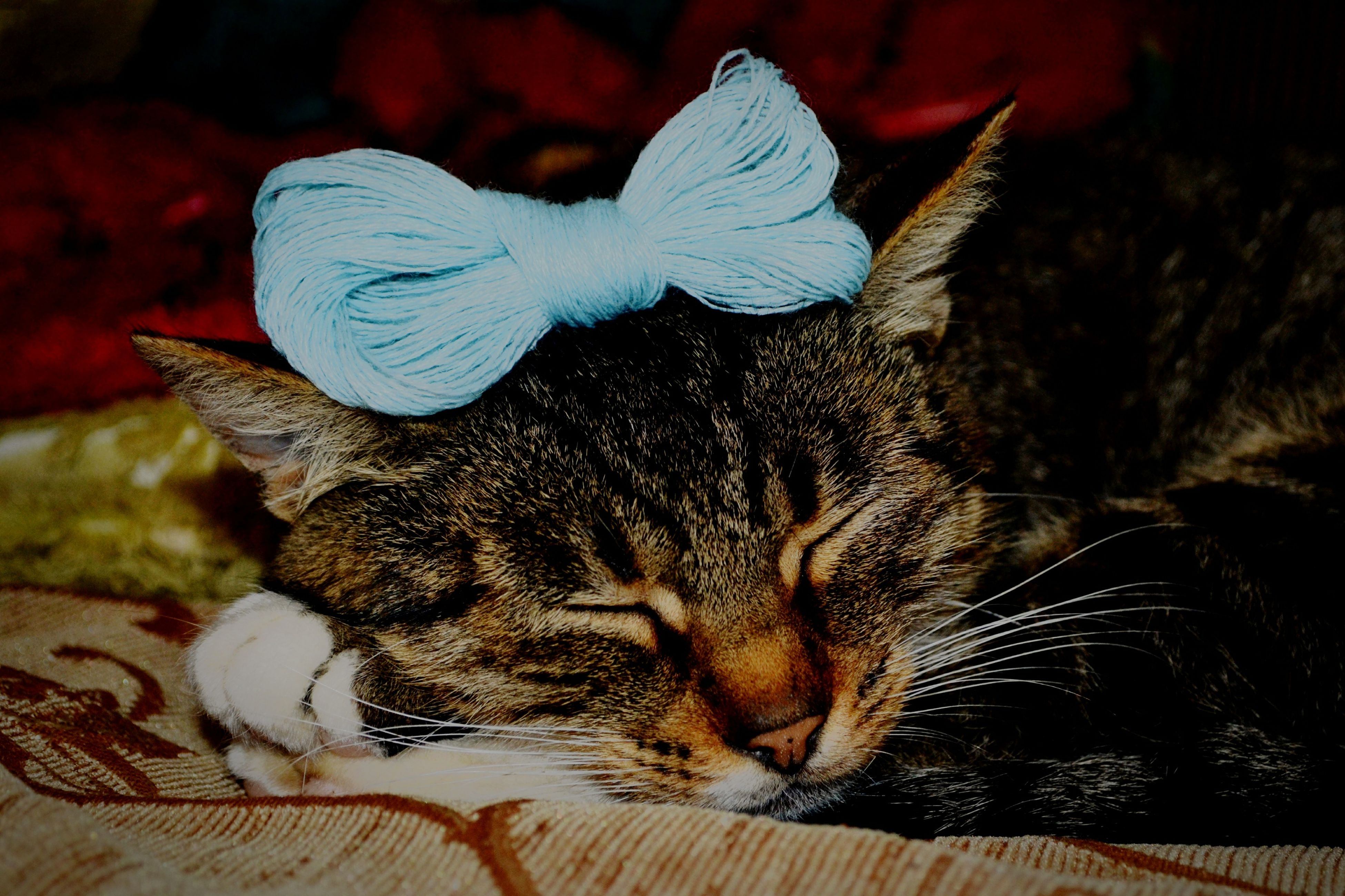 animal themes, one animal, domestic animals, pets, mammal, indoors, relaxation, lying down, domestic cat, close-up, resting, bed, feline, animal head, cat, whisker, no people, black color, focus on foreground, home interior