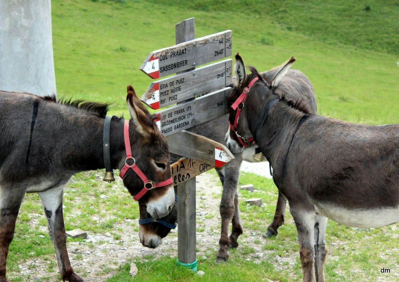 Sabotage... Taking Photos Hanging Out Relaxing Enjoying Life Mountains Mountain EyeEmBestPics Eye4photography  EyeEm EyeEm Gallery Mountains And Valleys Enjoying Life Nature Animal Animals Animal Photography Animal_collection Animal Themes Animalphotography Donkey Donkey Time