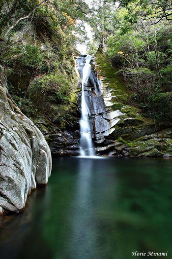Koto waterfall 和歌山県 琴の滝 Wakayama EyeEm Selects EyeEm Gallery EyeEm Nature Lover EyeEm Best Shots Waterfall Flowing Water Water Forest Nature Beauty In Nature Motion Long Exposure Outdoors No People