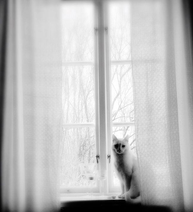 Friday Love & FridayLove 😘😘😘❤️ Blackandwhite Bnw_friday_eyeemchallenge Fortheloveofblackandwhite Tadaa Community Cat