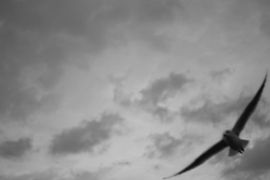 Sky Cloud - Sky No People Close-up Outdoors Seagulls Blurry Blackandwhite Legacy Lenses Helios 44m-6 Helios Sony A6000 Capture The Moment Welcome To Black