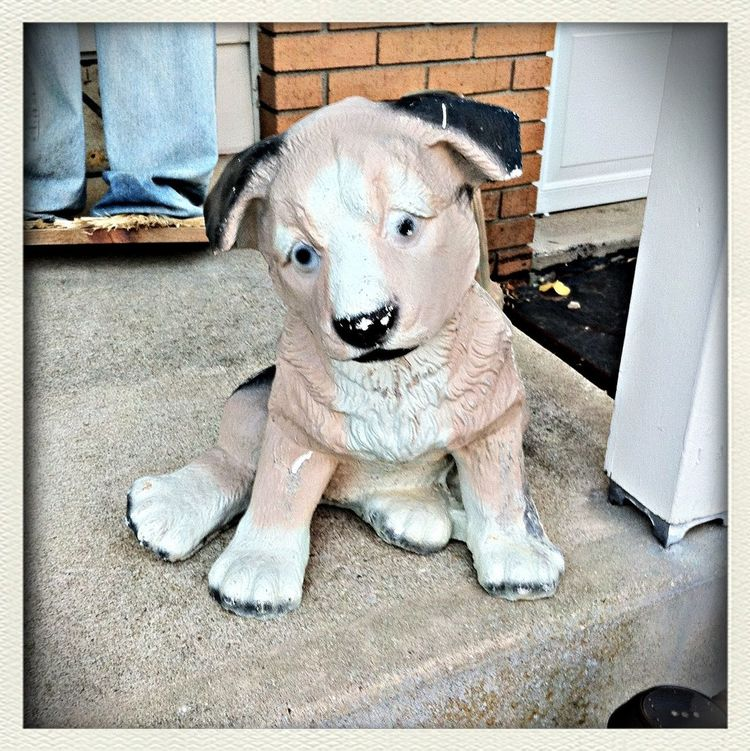Watch Dog Watchdog My Dog Outside My Front Door