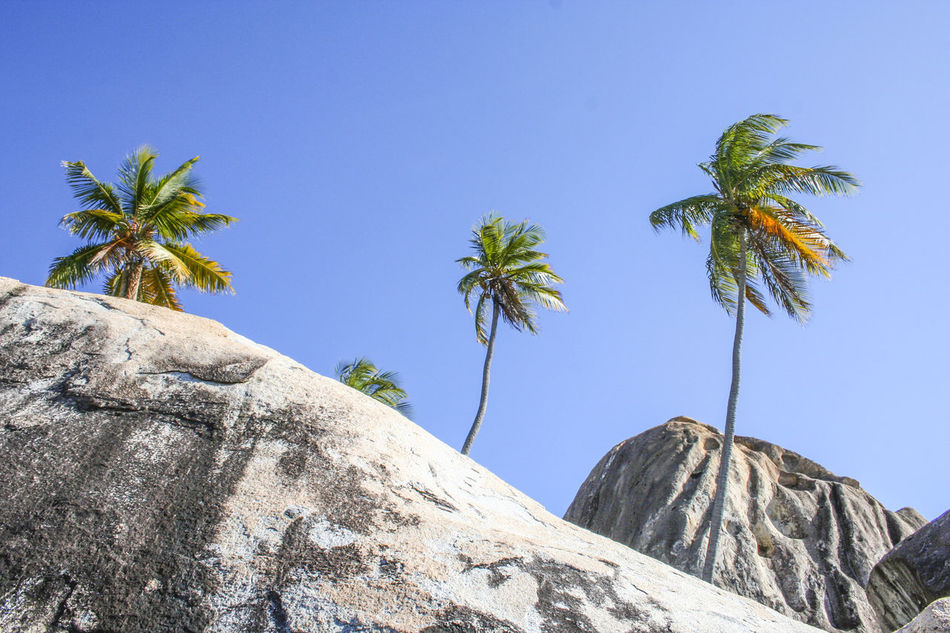 Beach Boulder British Virgin Islands Diagonal No Clouds Obstacle Palm Trees Rock Formation Rocks The Baths Tropical Climate Windy