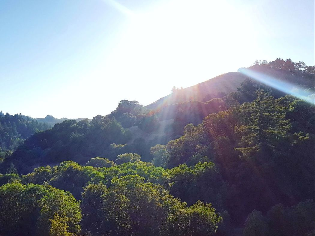 Sun Lens Flare Sunlight Nature Agriculture No People Beauty In Nature Outdoors Scenics Growth Landscape Day Rural Scene Mountain Tree Plant Sky Clear Sky Freshness