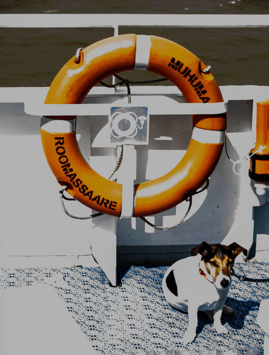 Animal Themes Communication Day Dog Domestic Animals Guidance Information Puppy Tranquil Scene Mammal On Board Boat One Animal Pets Sign Text Warning Sign Western Script Dog Ferryboat Puppydog Maritime Photography