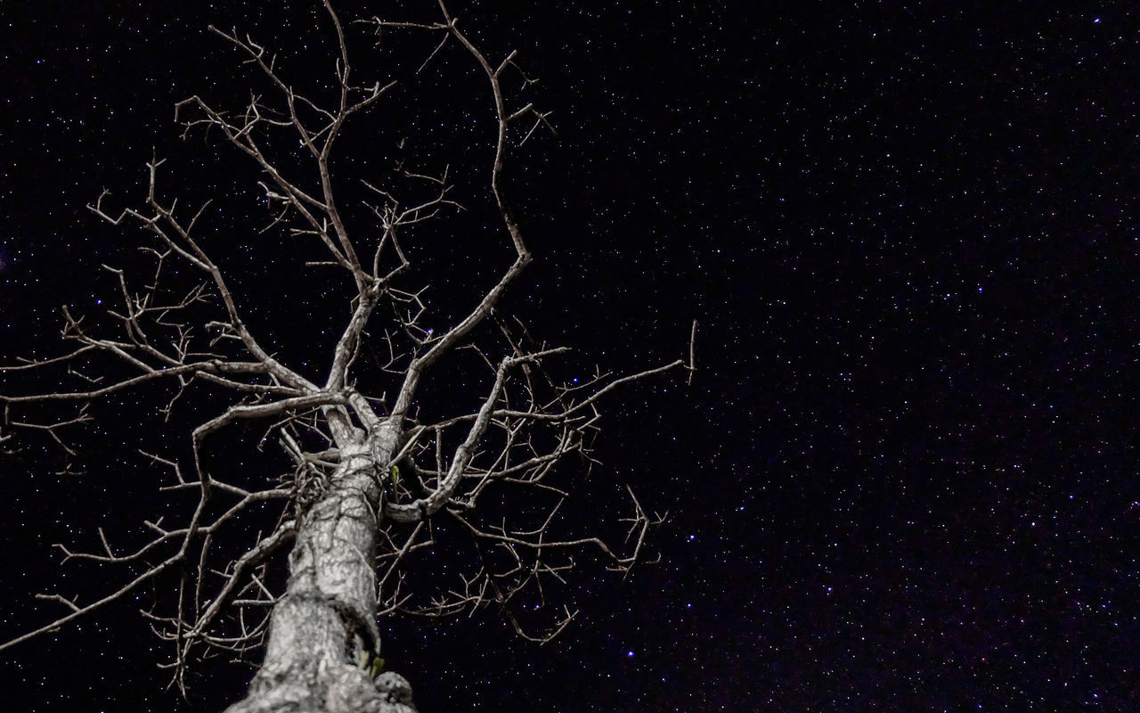 night, star - space, bare tree, tree, no people, tree trunk, tranquility, outdoors, tranquil scene, nature, branch, beauty in nature, low angle view, sky, scenics, astronomy, black background, close-up, galaxy