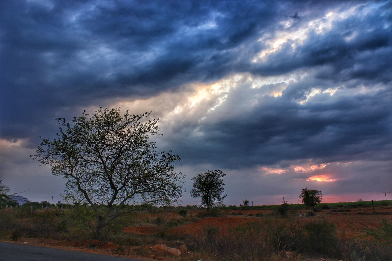 Eye Em Best Shots -Landscapes Tree No People Cloud - Sky Nature Dramatic Sky Storm Cloud Grass Beauty In Nature Outdoors Sky Day Landscape Summer Memories 🌄 Eyeem India Incredible India Dramatic Sky Nature Tree Cloudscape Field Melancholic Landscapes