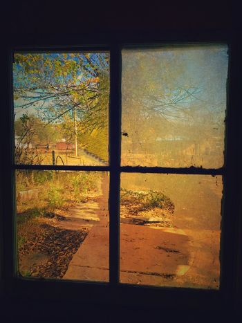"""""""Four Pane"""" A four pane window looks out from the dark interior of an abandoned old house in the Village of Corona, New Mexico to the living color just beyond its borders. New Mexico Photography New Mexico Abandoned Buildings Inside Out Interior Window Pane Window Window No People Day"""