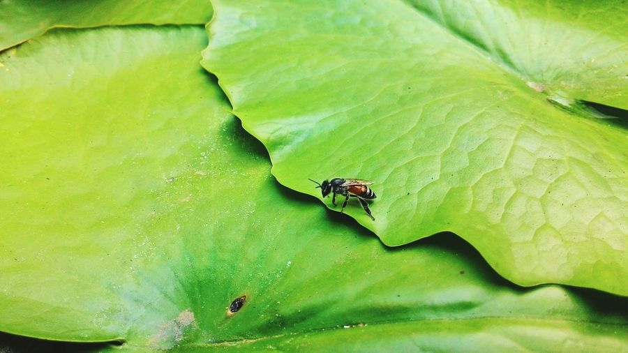 #bee #insects #Nature  #green #Fresh #outdoor #lightningbug Leaf No People Outdoors Day Close-up Mammal
