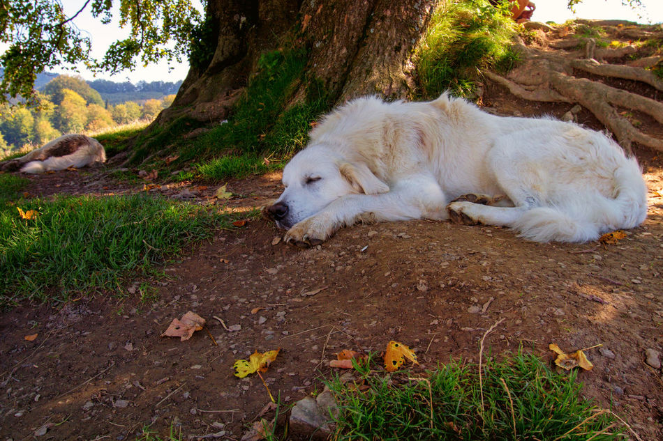 Capture The Moment Captured Moment Chill Out Chill Out Time  Close-up Dog EyeEm Gallery EyeEm Nature Lover Lying Down Mountains Nature Nature On Your Doorstep No People One Animal Outdoors Relaxing Tree EyeEmNewHere Sun Rays Naturelovers Catch The Moment