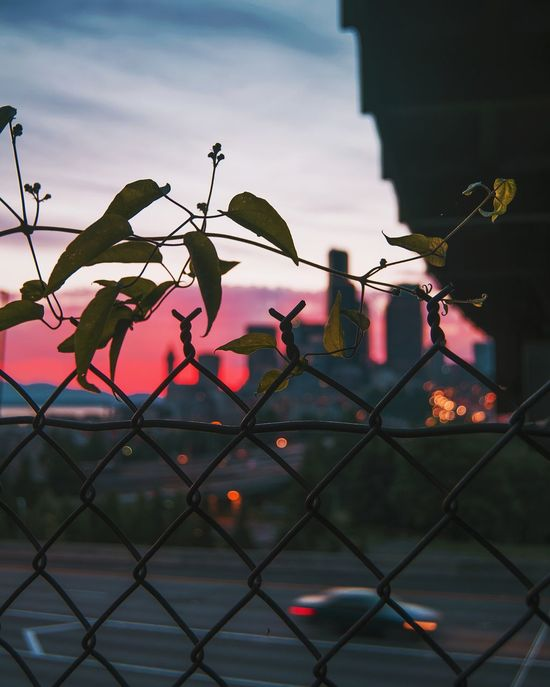 EyeEm Selects Chainlink Fence Security Safety Protection Metal No People Outdoors Day Sky Water Nature Close-up Seattle, Washington Color Palette Colors Colorsplash Color Photography Moody Colorful Bokehlicious Bokehkillers Urban Skyline Cityscape The Week On EyeEm