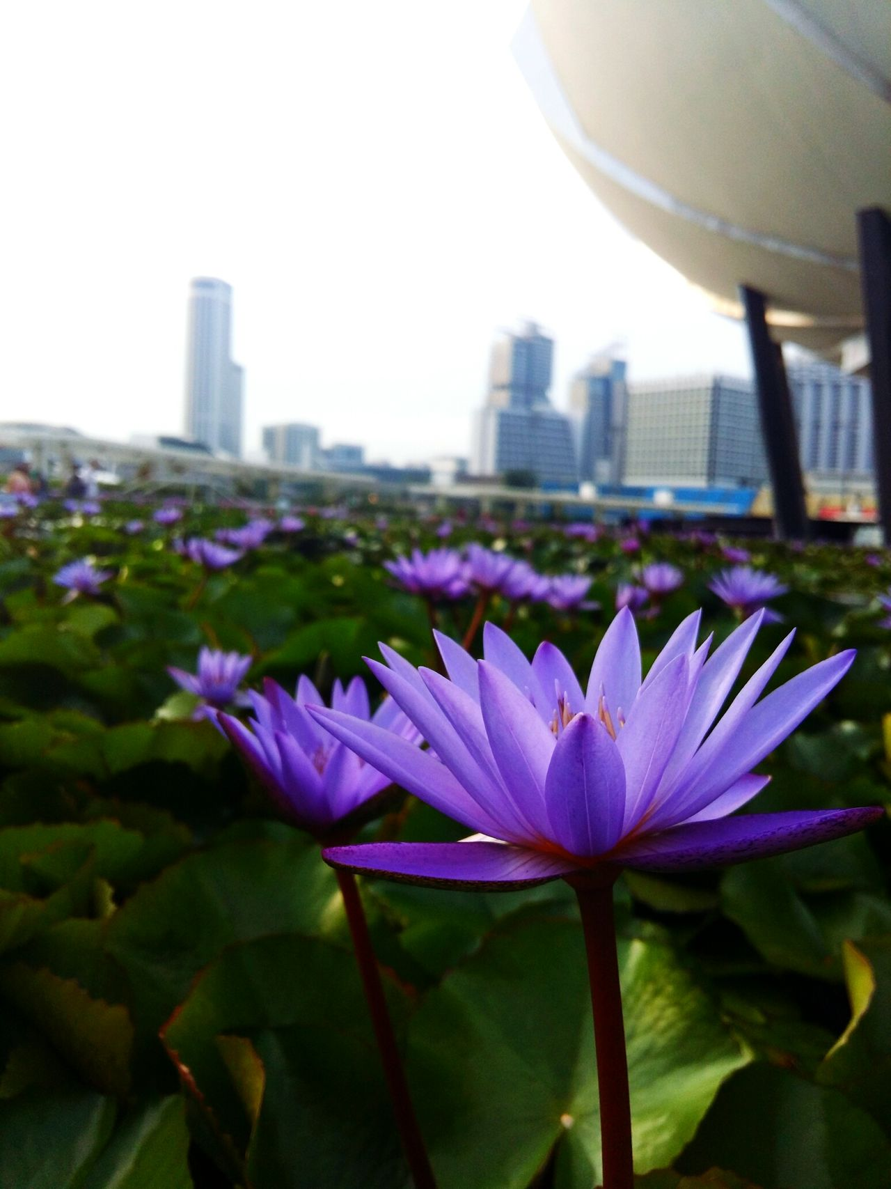Singapore City Singapore View Singapore Marina Bay Sands Flowerphotography EyeEmGalley EyeEmNewHere EyeEmFlower Eyeemmarket Eyeem2017