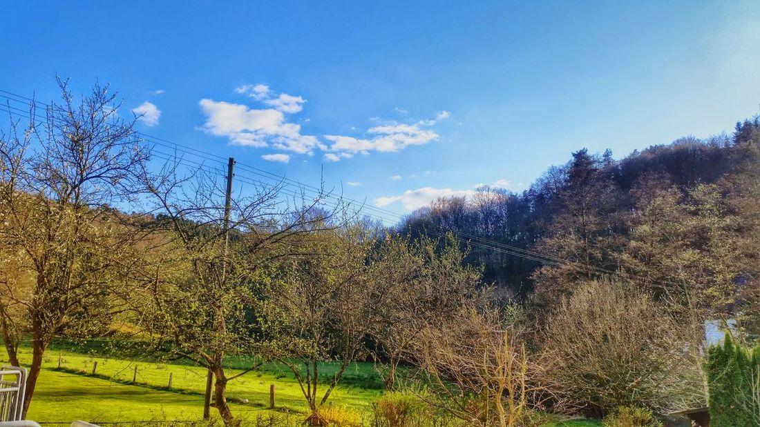 Natur Baum Let's Do It Chic! Baum 🌳🌲 Ein Baum Wolken Wolken *-* Respect For The Good Taste