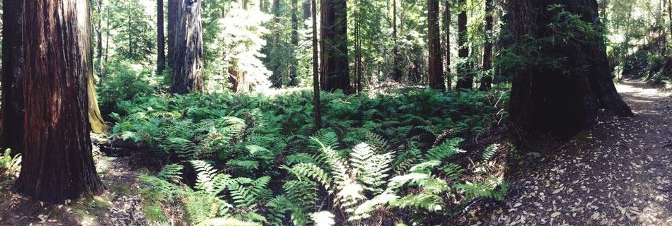 Welcome to jarasstic park!! Montgomery Woods Vernforrest California Green Cool Wheresthedinos LOL