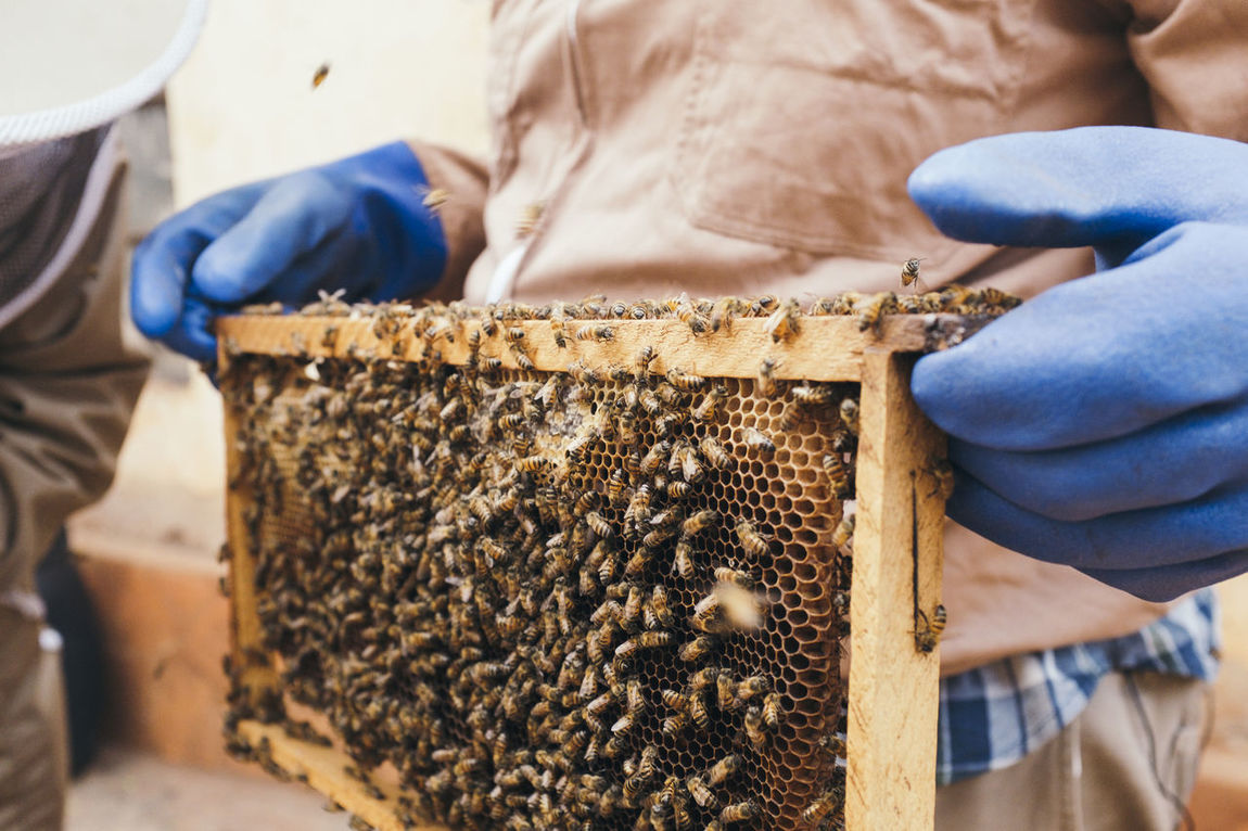 Africa African Alley Beehive Bees Beeswax Business Finance And Industry Entrepreneur Entrepreneurship Flying Hive Holding Honey Honeycomb Making Man Outdoors Product Protective Glove Protective Workwear Smoke Social Business Trays Wax Workshop